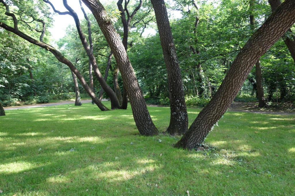 Bois de Boulogne I