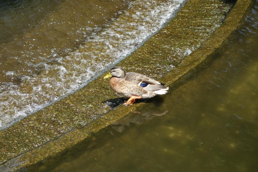 Ducks I