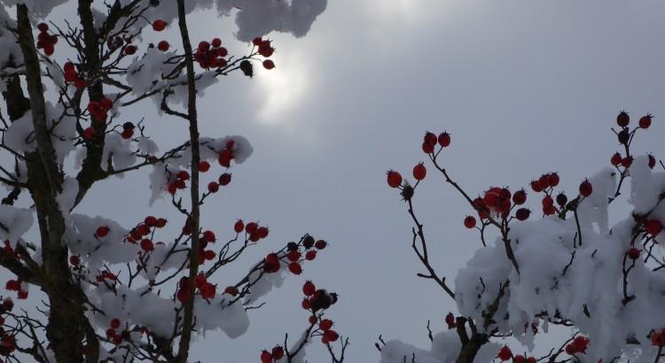 Berries in the snow II
